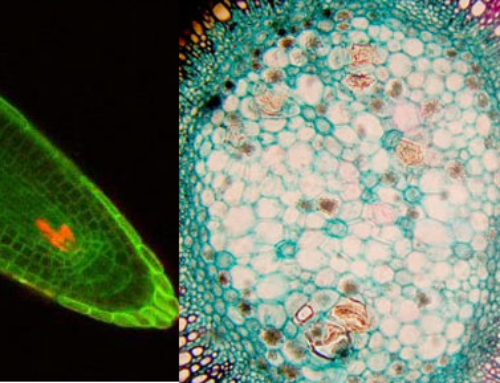 PSC® Plant Stem Cells